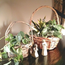 philodendron & assorted