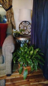 peace lily & pothos